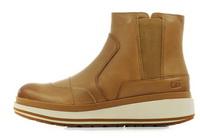 Cat Pantofi Olearia 3