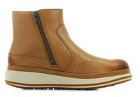 Cat Pantofi Olearia 5