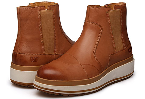 Cat Këpucë Olearia
